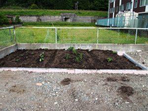 完成した菜園